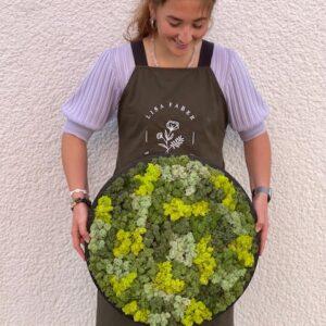 Moscirkel 50 cm IJslands mos